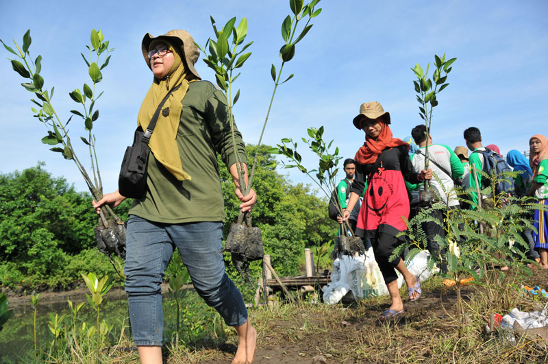 IDEP Foundation Replanting Indonesia Mangroves
